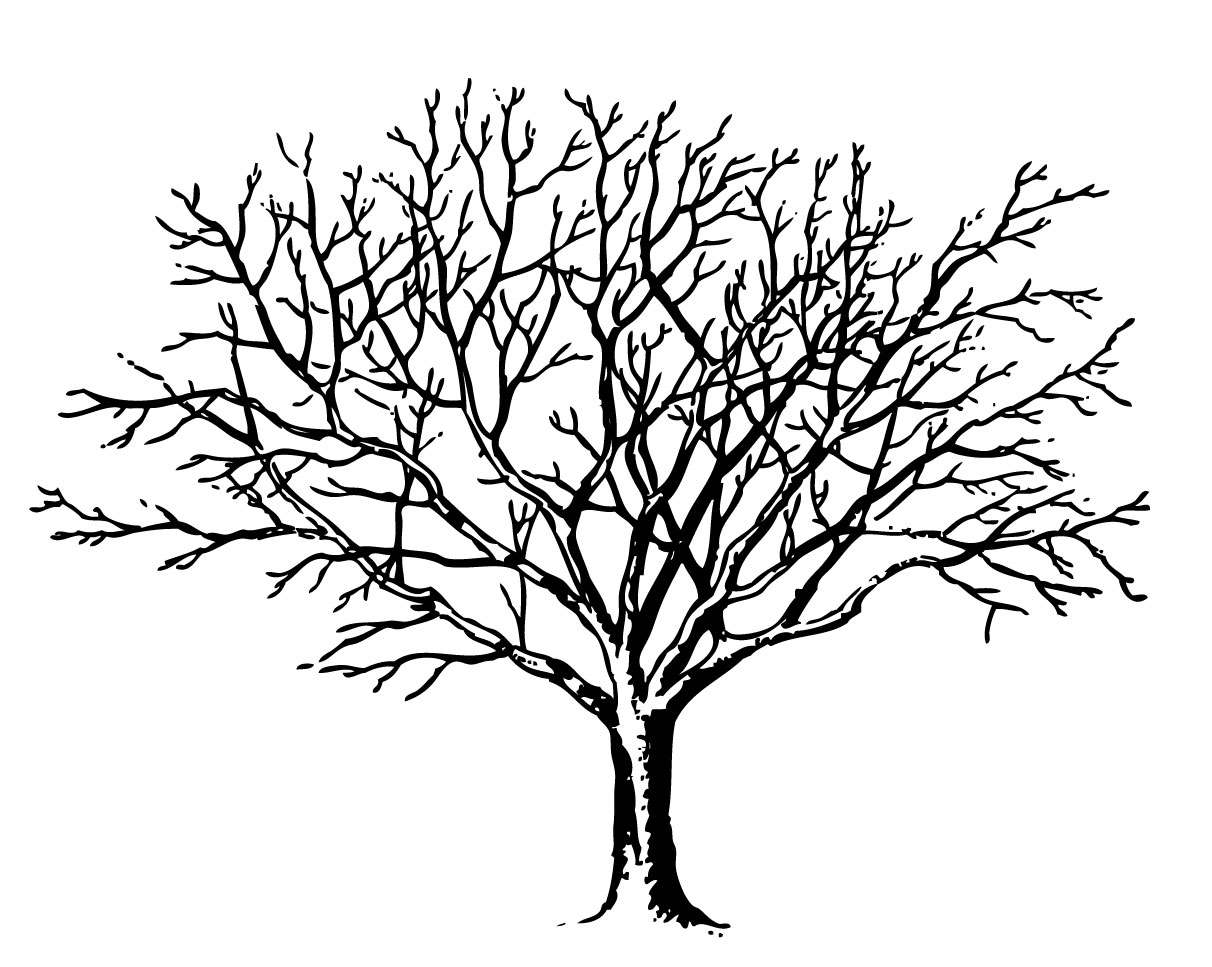 1212x967 Weird Coloring Pages Of Trees Without Leaves Tree Page To Print