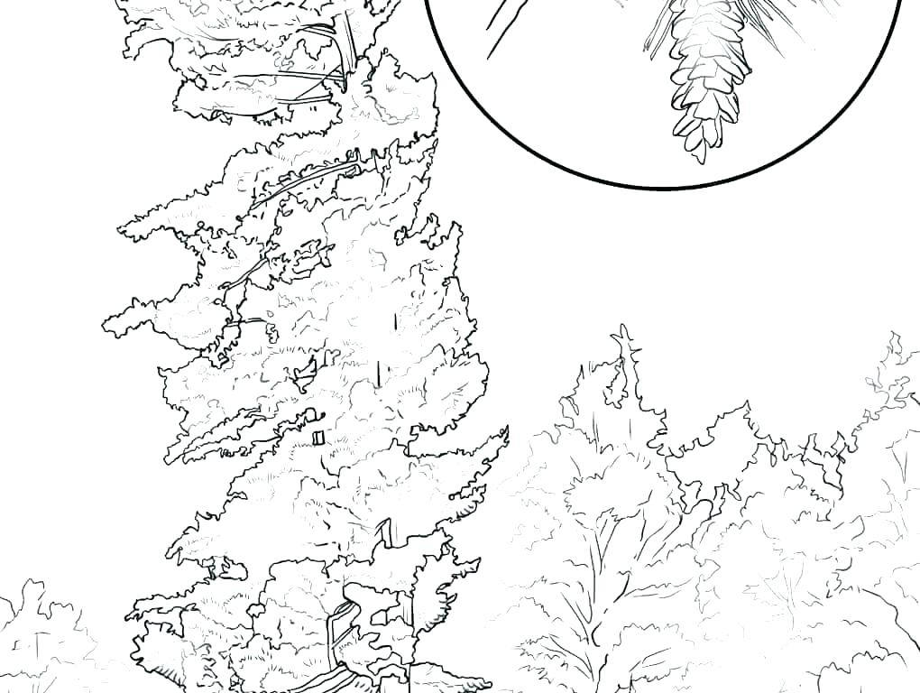 1020x768 Coloring Pages Of Trees Without Leaves