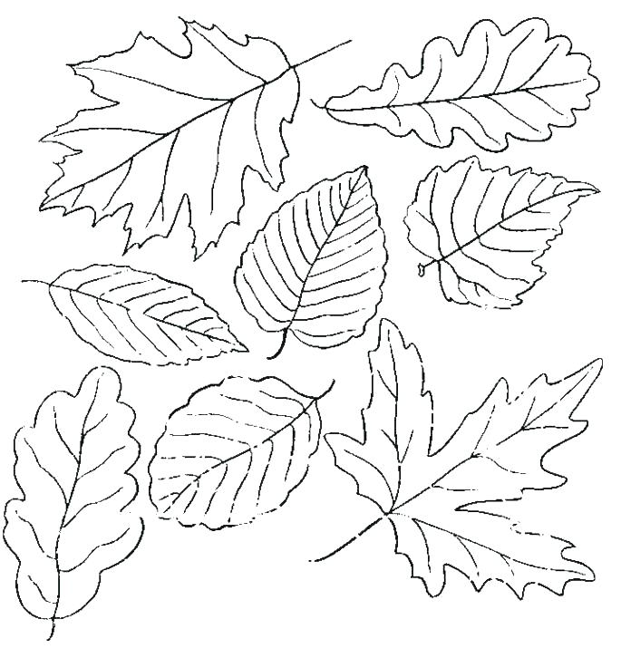 685x726 Tree Leaves Coloring Pages