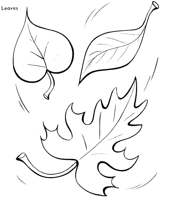 600x734 Tree Trunk Coloring Page