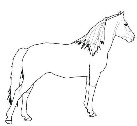 480x441 Coloring Page Of A Horse Horse Printable Coloring Pages Horse
