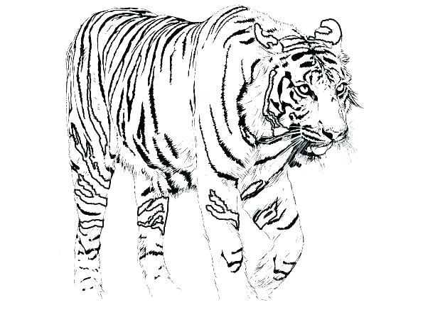 595x447 Awesome Tiger Coloring Pages Print Coloring Pages Also Awesome