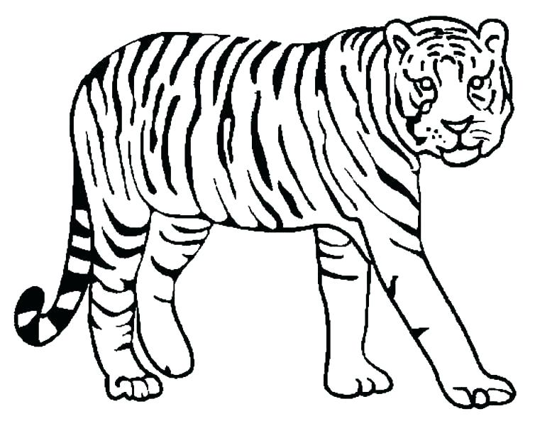754x600 Coloring Page Of Tiger Coloring Tiger Tiger Pictures To Color