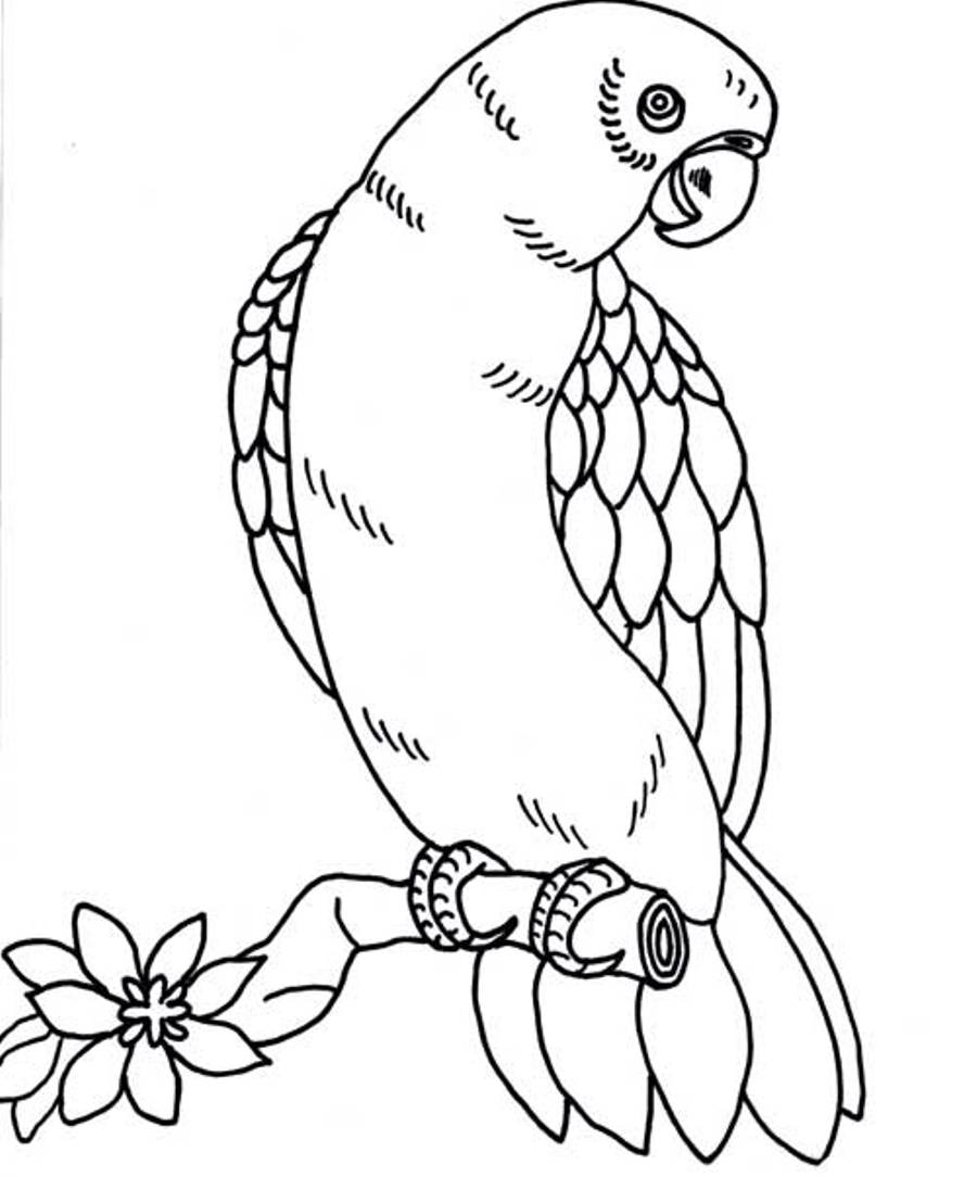 900x1084 Realistic Parrot Coloring Pages Coloring Pages