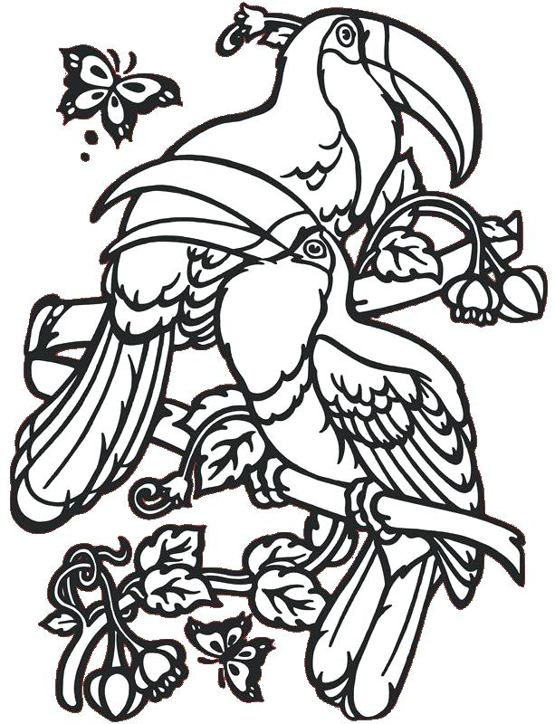 613x800 Toucan Coloring Pages Bird Coloring Pages For Adults Packed