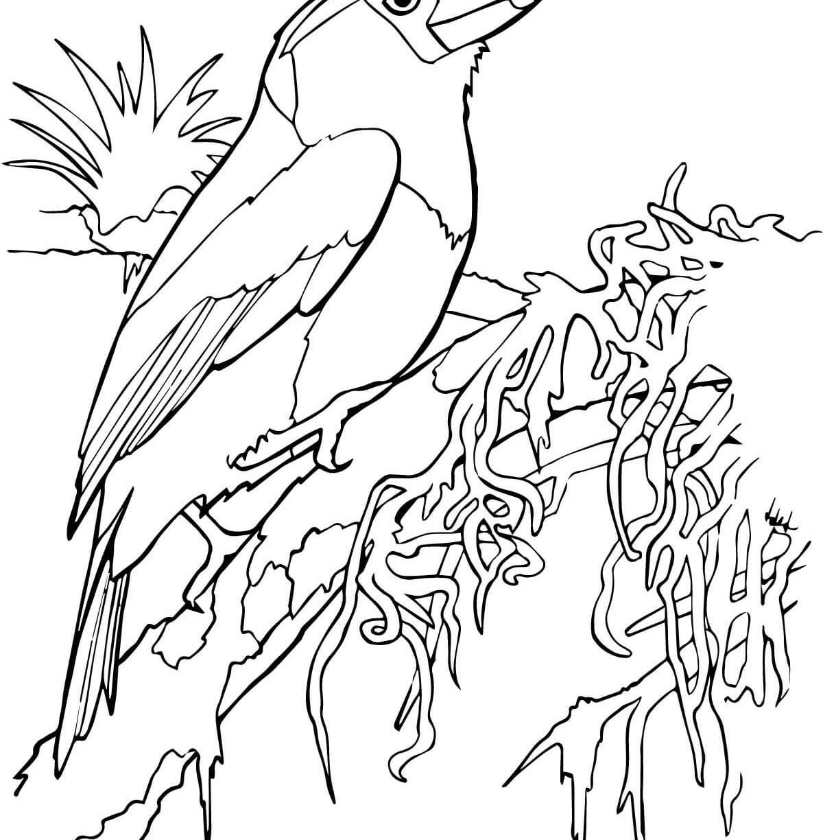 1200x1224 Tropical Bird Coloring Pages Hellokids Pagewtf