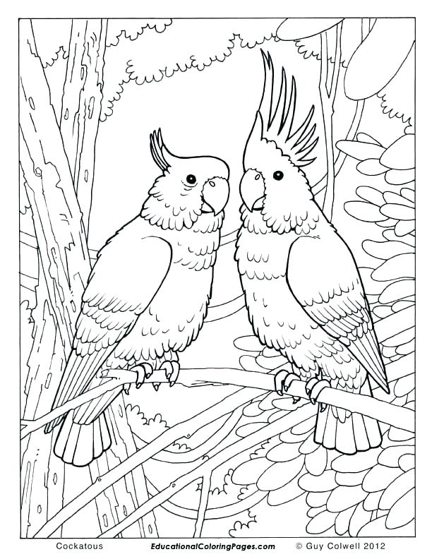 612x792 Tropical Bird Coloring Pages Tropical Coloring Pages Tropical