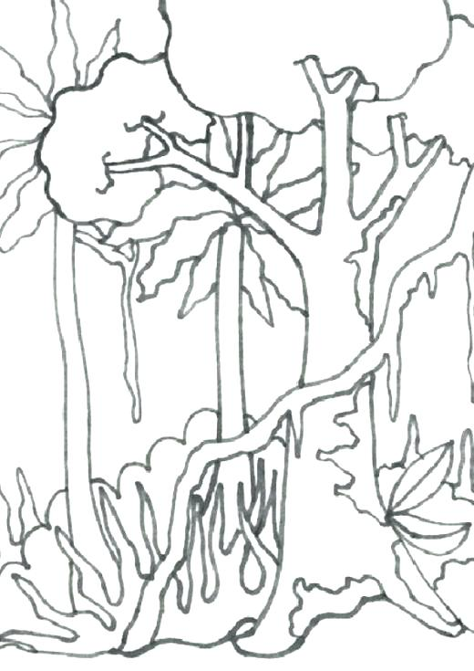 520x735 Tropical Coloring Pages Rain Forest Coloring Pages Tropical