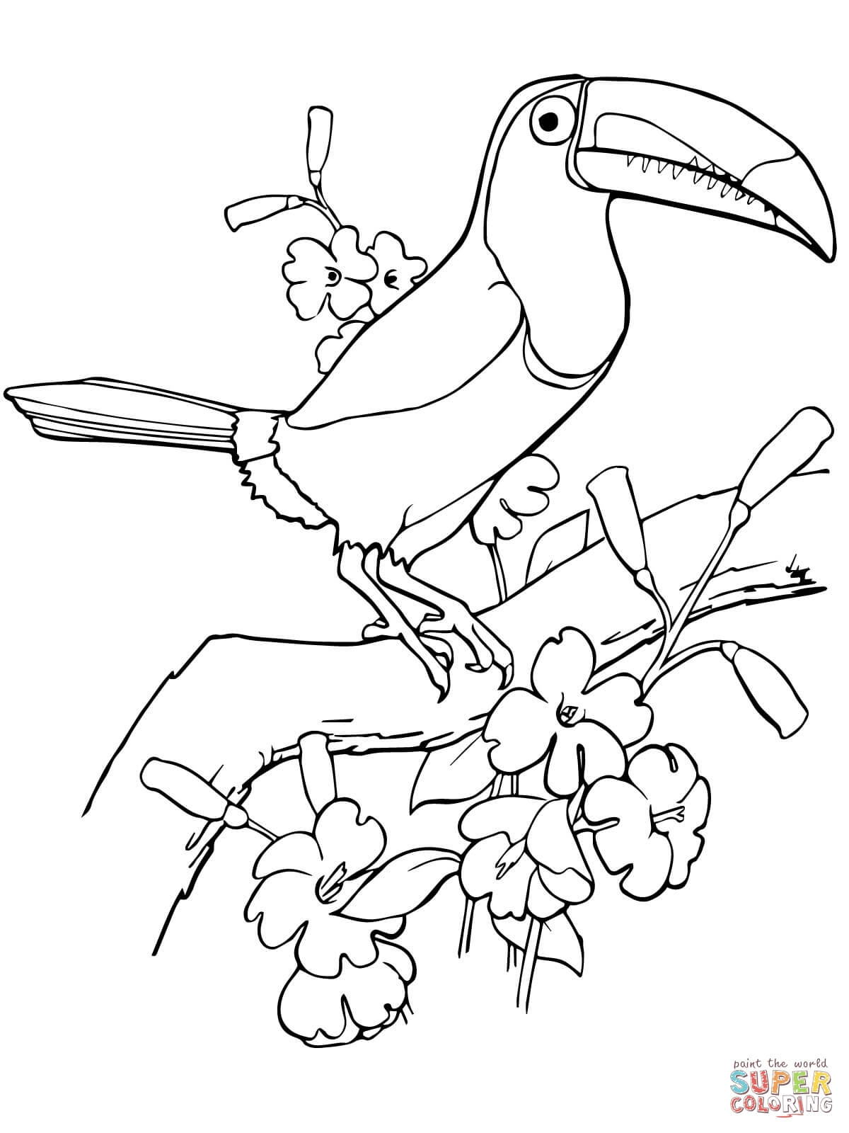 1200x1600 Unique Tropical Bird Coloring Pages Collection