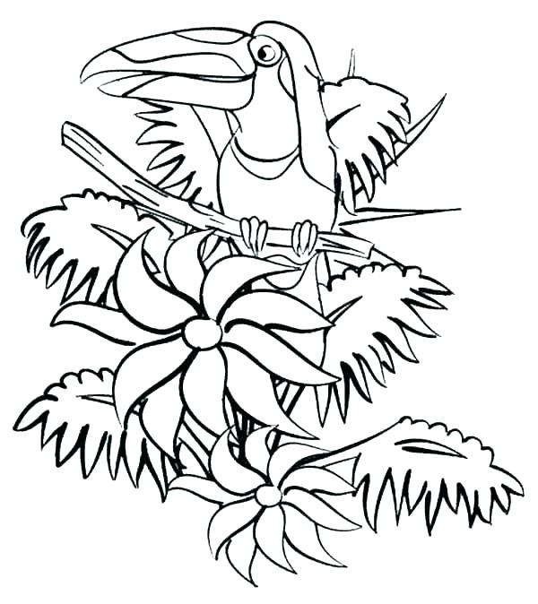 600x674 Printable Rainforest Coloring Pages Printable Coloring Pages