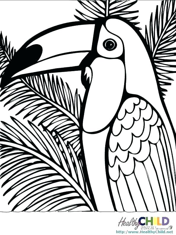 594x793 Rainforest Animals Coloring Pages Coloring Pages Printable