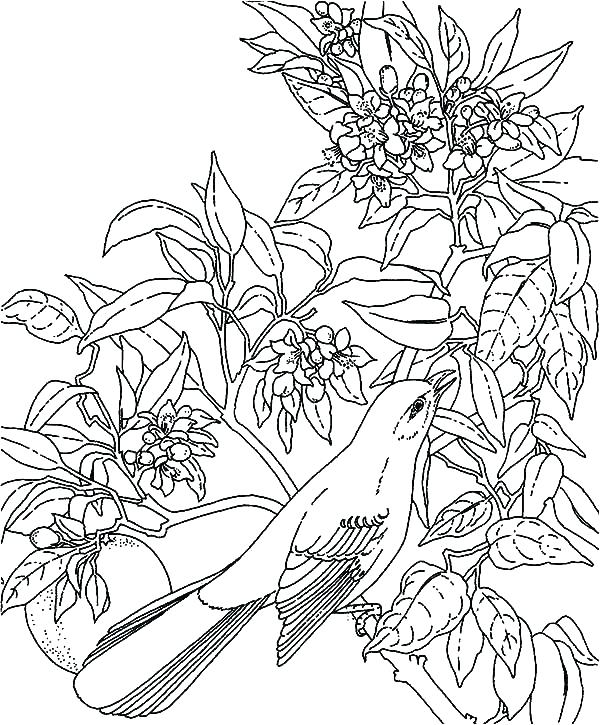 600x725 Rainforest Coloring Page Coloring Pages Tropical Coloring Page