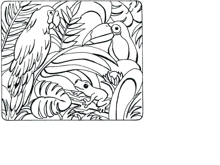 736x552 Rainforest Coloring Page Tropical Coloring Page Animals Pages Pin