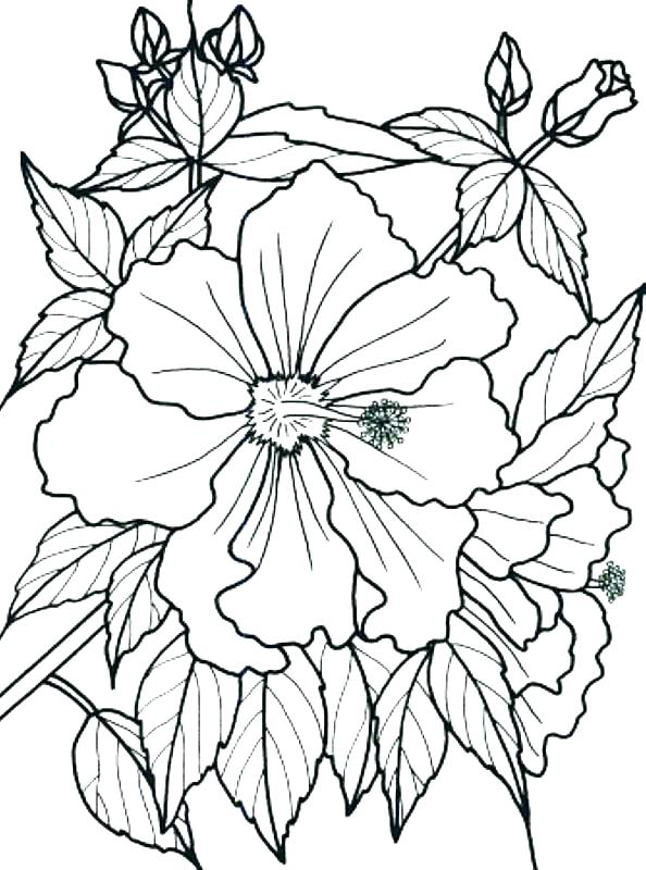 594x800 Rainforest Flowers Coloring Pages