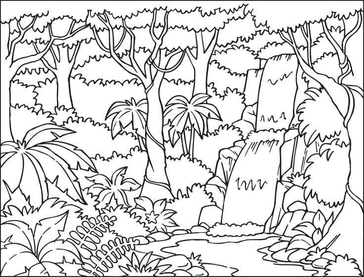 736x559 And Tropical Coloring Pages Color Jungle Coloring Book Wallpaper