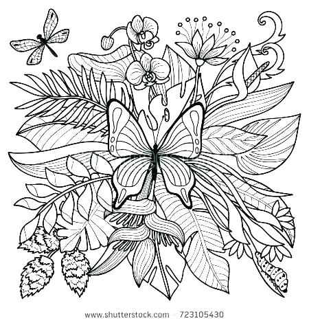 450x470 Rainforest Plants Colouring Pages Tropical Coloring Pages Tropical