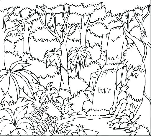 512x463 Tropical Rainforest Coloring Pages Coloring Pages To Print