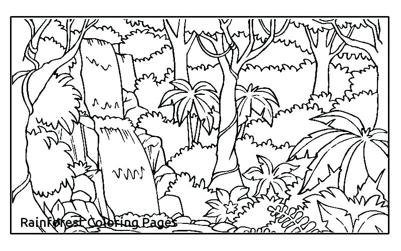 800x500 Tropical Rainforest Coloring Pages Tropical Coloring Pages
