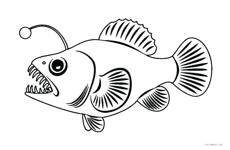 800x524 Tropical Fish Coloring Pages