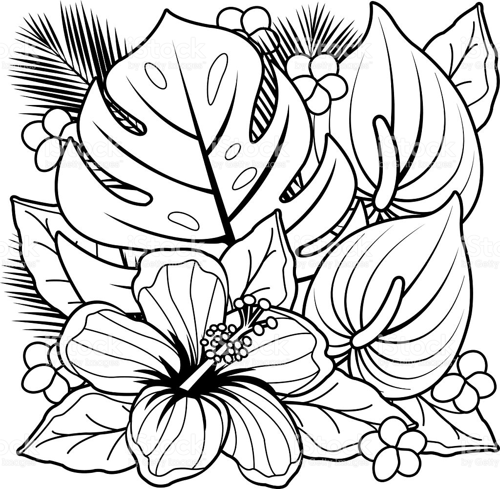 1024x1001 Tropical Flower Coloring Pages Tropical Coloring Pages