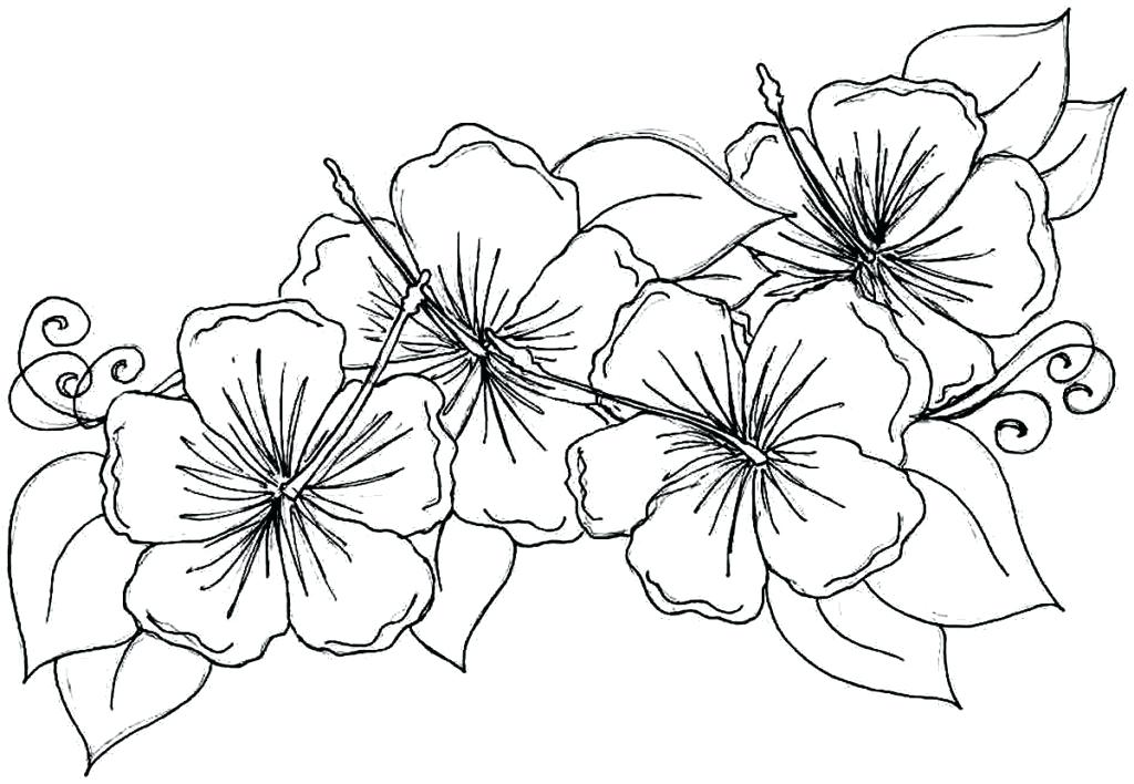 1024x708 Flower Basket Colouring Pages Tropical Coloring Inside Prepare