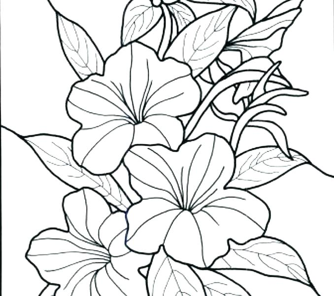 678x600 Free Printable Realistic Flower Coloring Pages Printable Coloring