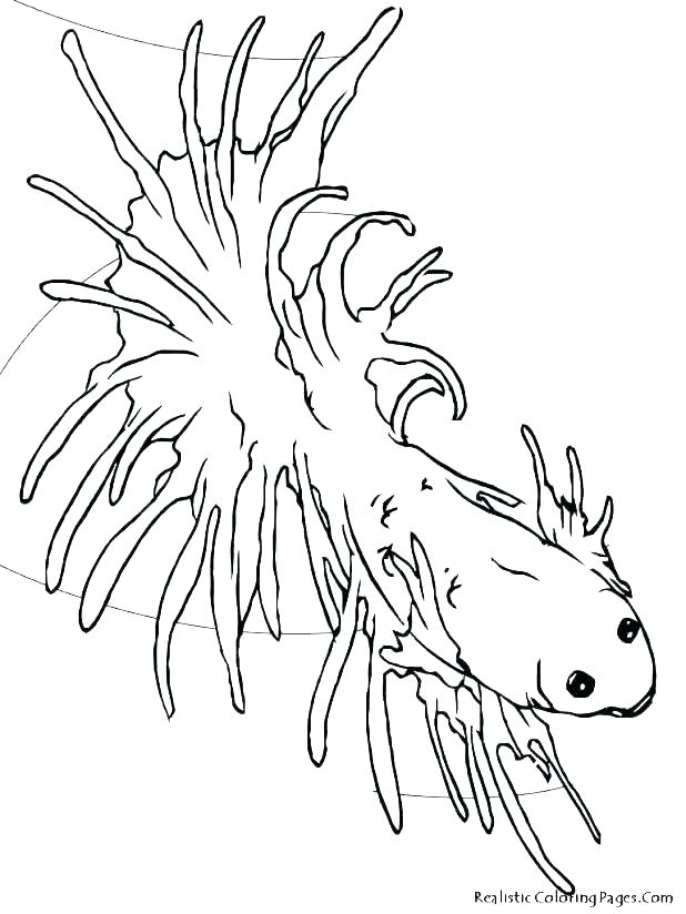 618x824 Marvellous Free Fish Coloring Pages Tropical Fish Coloring Pages