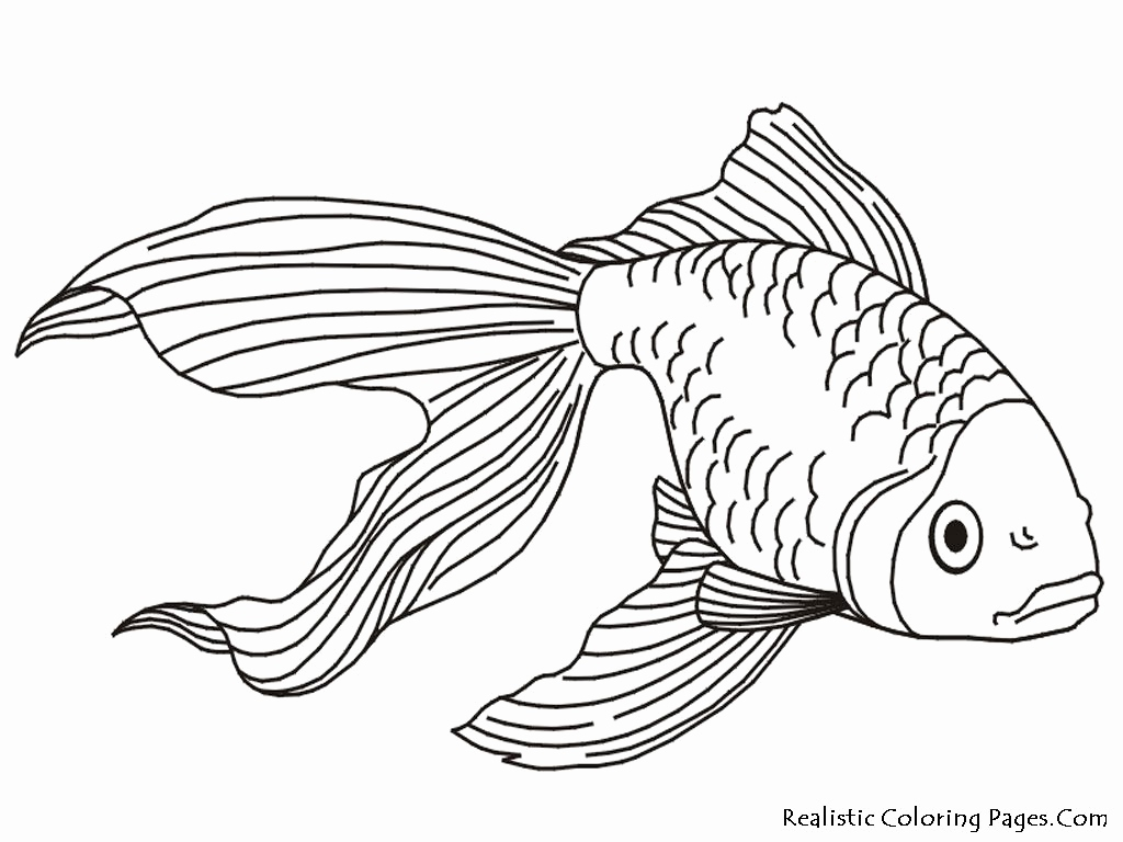 1024x768 Realistic Coloring Pages Beautiful Tropical Fish Coloring Pages