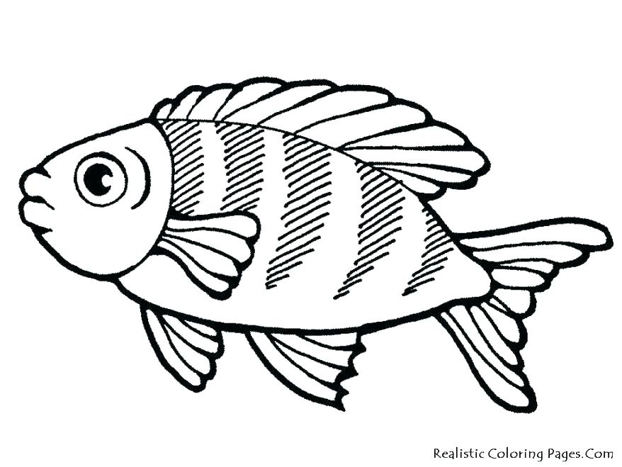 878x659 Tropical Fish Coloring Pages Tropical Fish Coloring Pages Coloring
