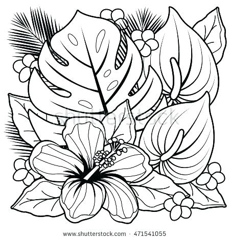 450x470 Hibiscus Flower Coloring Pages Flowers Coloring Book Plus Tropical