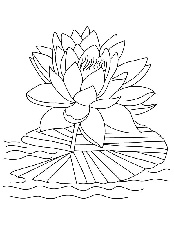 600x776 Lotus Tropical Flower Coloring Pages Batch Coloring