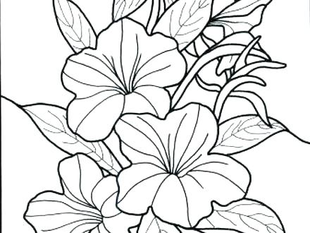 440x330 Rainforest Flowers Coloring Pages Flower Coloring Pages Flower
