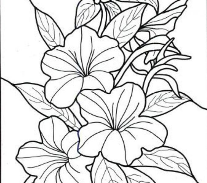 678x600 Seasonal Colouring Pages Tropical Flower Coloring On World Flower