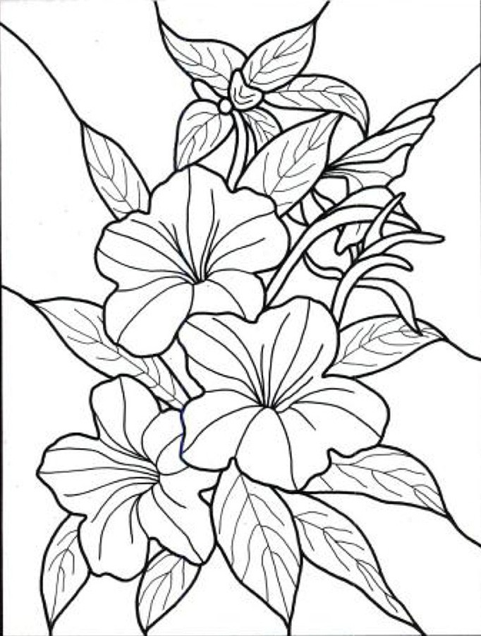682x900 Tropical Flower Coloring Book Pages