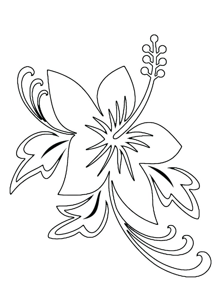 736x989 Tropical Flower Coloring Pages Craft And Dyi