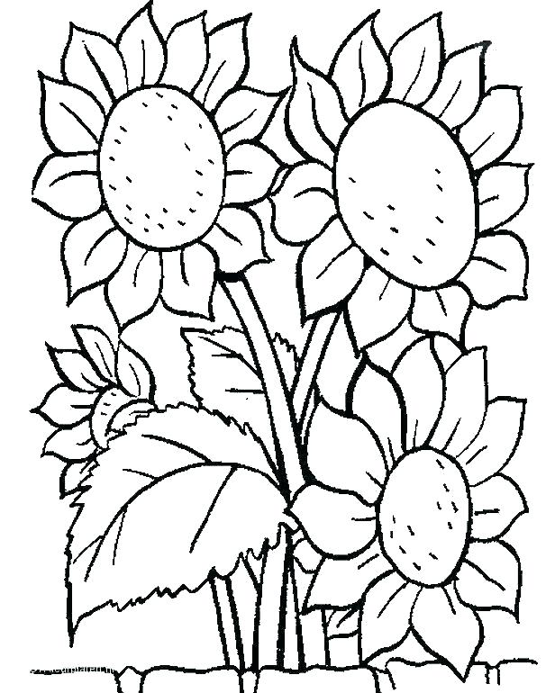 616x770 Tropical Flower Coloring Pages To Print Color Bros Tropical