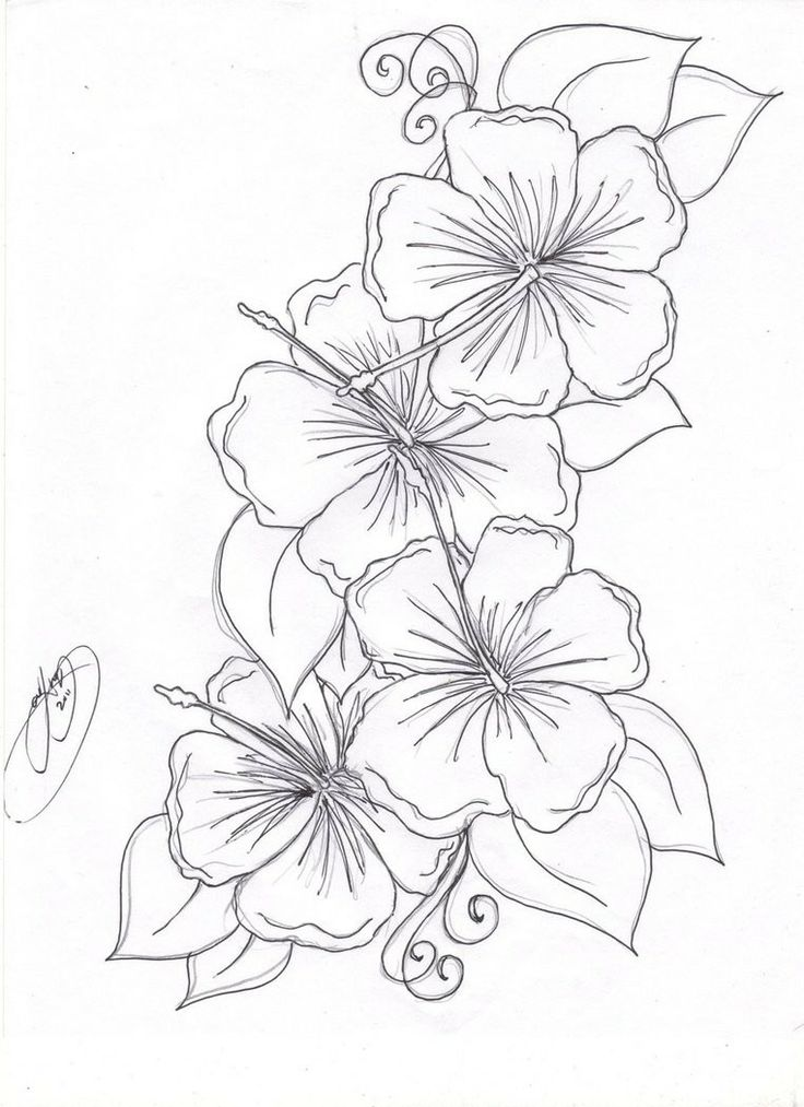 736x1013 Tropical Flowers Coloring Pages