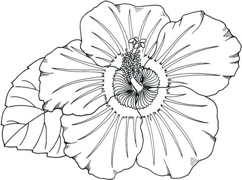 480x357 Tropical Flowers Colouring Pages Flower Coloring Printable Color