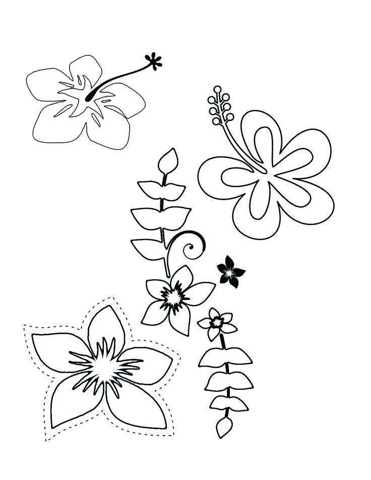 736x952 Tropical Flowers Colouring Pages