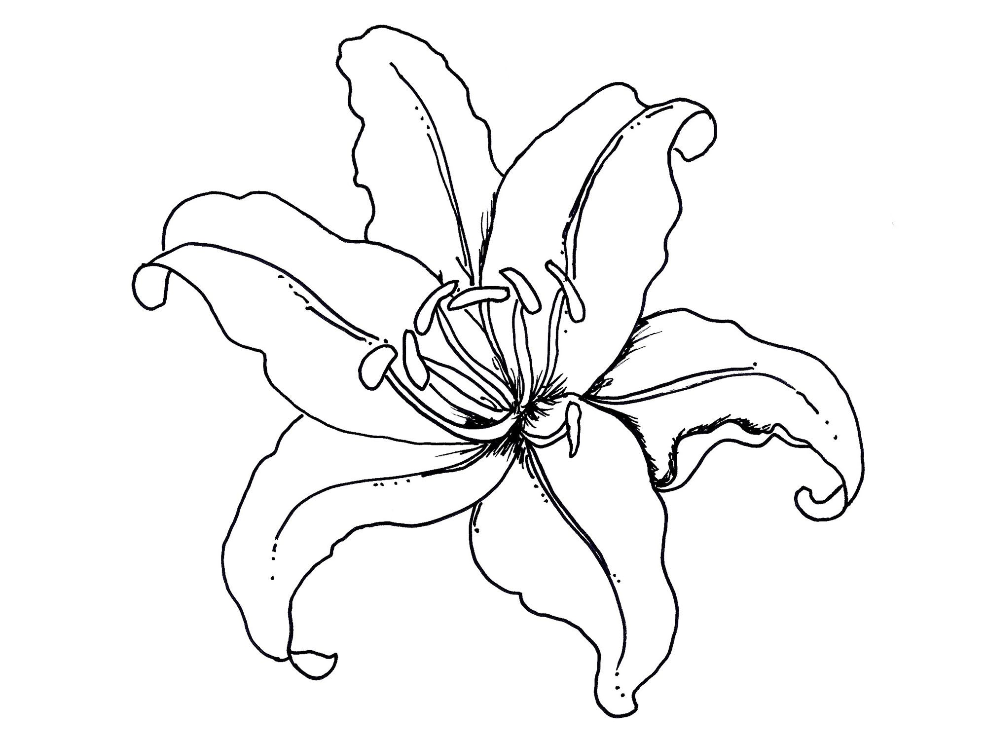 1999x1500 Fascinating Tropical Flower Coloring Pages To Print U Color Bros