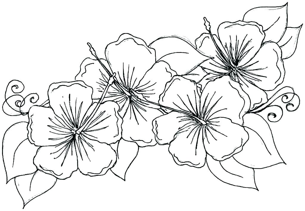 1024x708 Forest Colouring Pages Coloring Page Forest Forest Coloring Pages