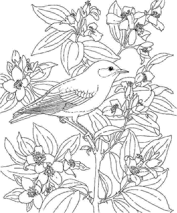 700x846 Hawaiian Flower Coloring Sheets Island Coloring Pages With Adult
