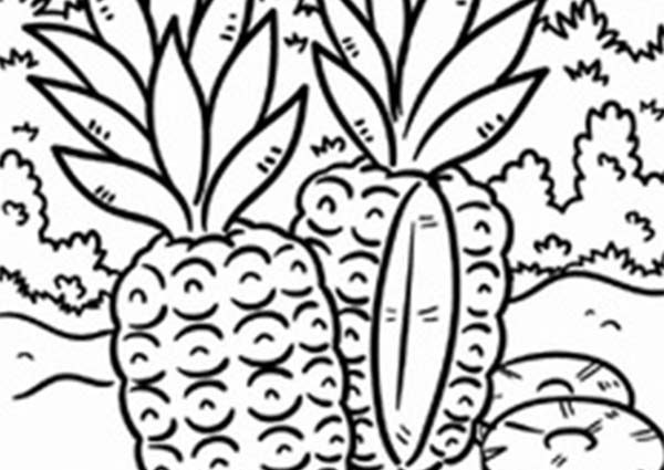 600x425 Tropical Coloring Pages To Print Wild Pineapple In A Tropical