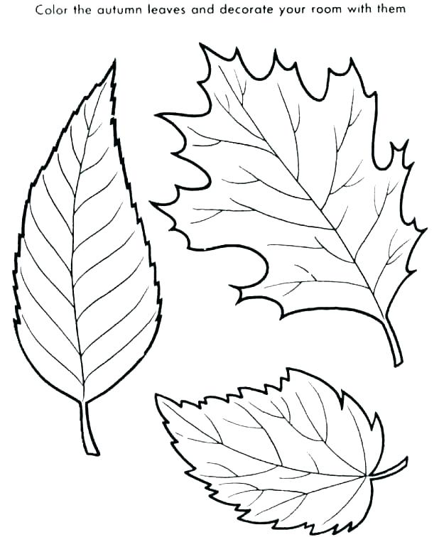 618x756 Coloring Pages Of Leaves Printable Leaves Coloring Pages Leaf