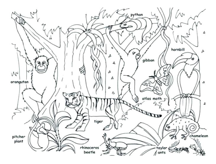 730x554 Coloring Pages Plants Animals Coloring Pages Tropical Jungle