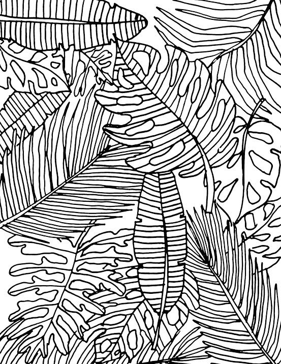 553x716 Displaying Tropical Leaves Coloring Page