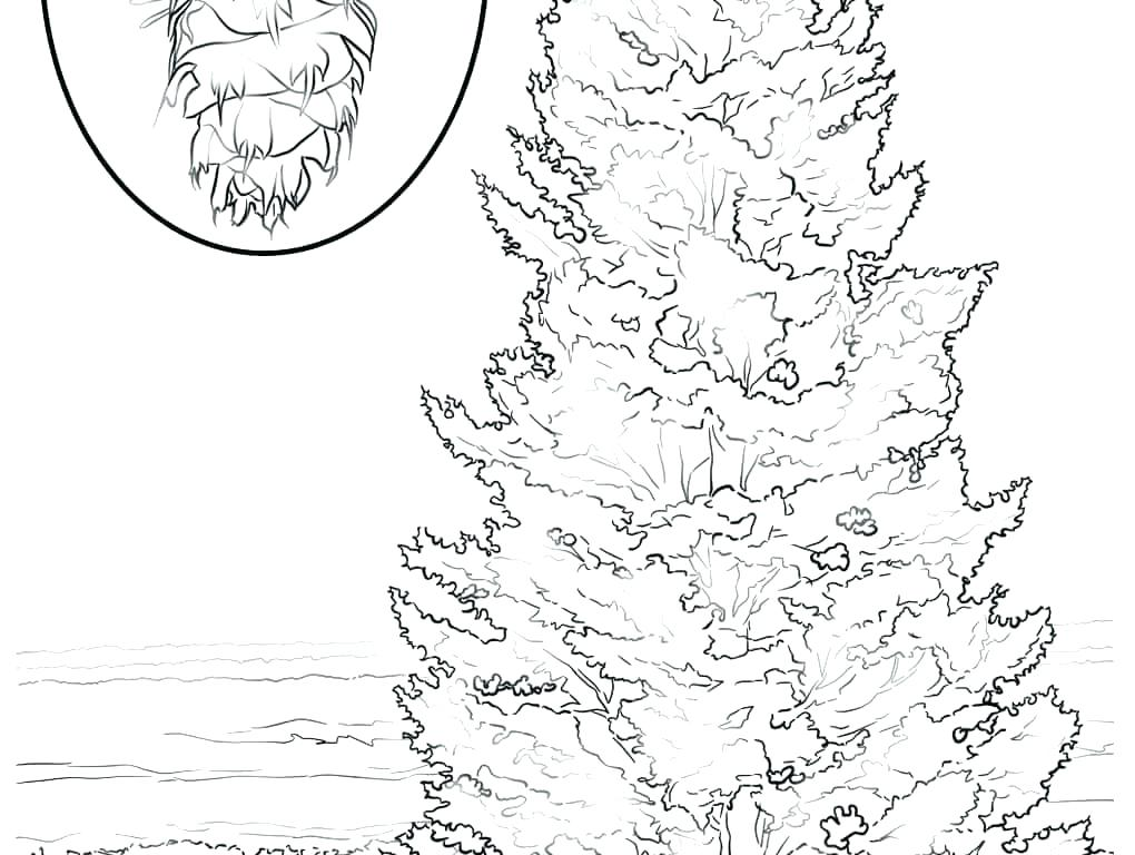 1020x768 Palm Tree Coloring Page Palm Trees Coloring Pages Fall Tree