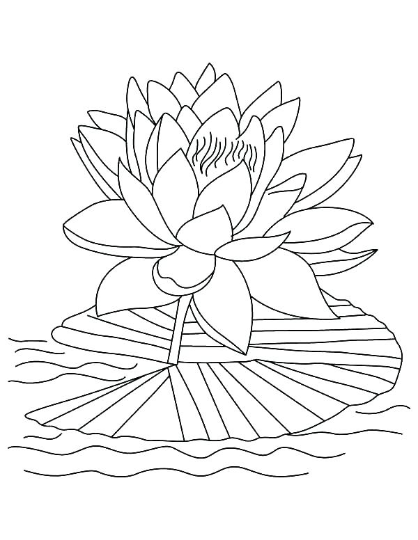 600x776 Tropical Coloring Pages Tropical Fish Coloring Page Tropical Fish