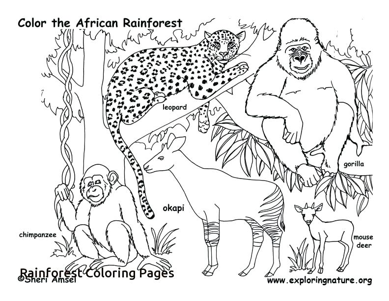 Tropical Rainforest Animals Coloring Pages At Getdrawings Free Download