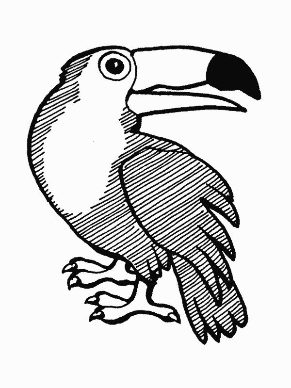 600x800 Rainforest Animals Coloring Pages Printable Rainforest Animal